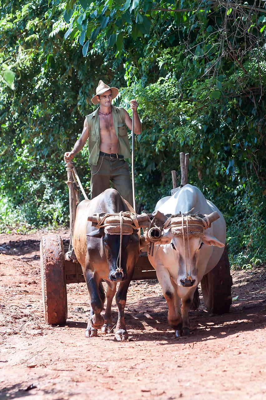 Agricultores de Cuba