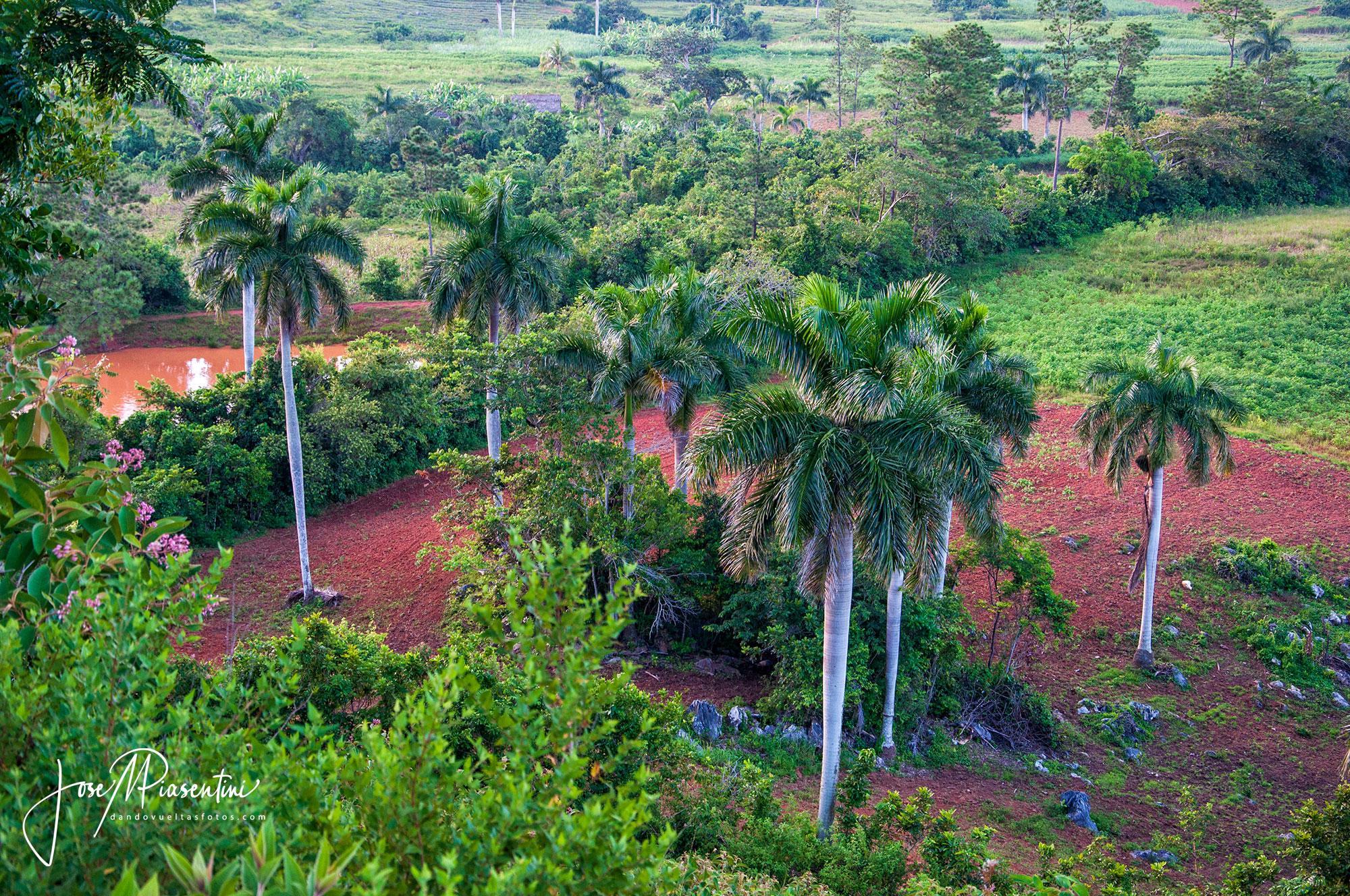 plantaciones tabaco en viñales