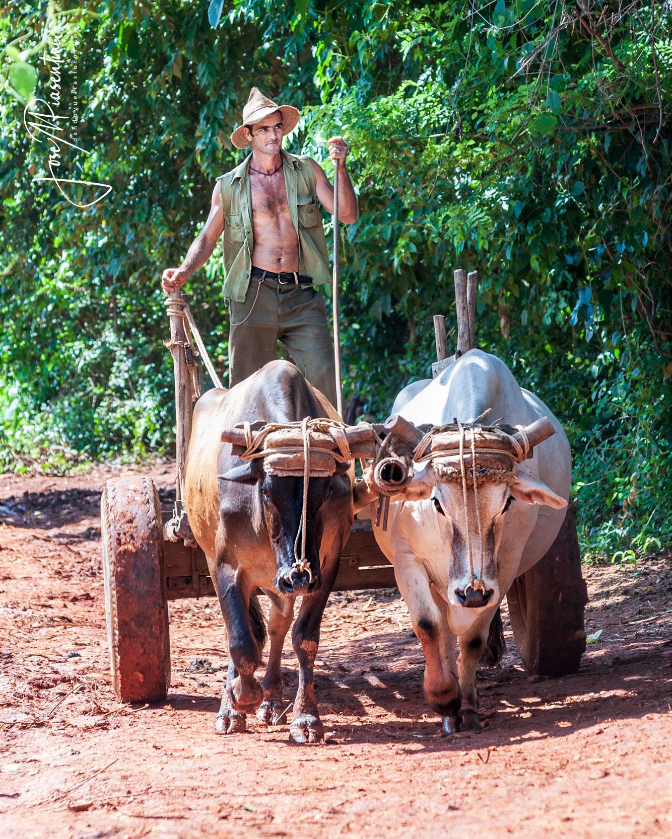 trabajadores de cuba