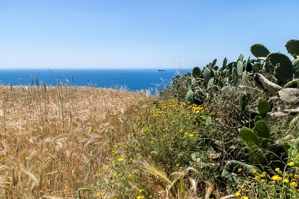 trigo-Malta_Mnajdra0002