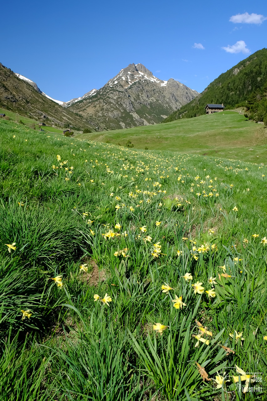 Most-beautiful-valley-of-Andorra-in-spring