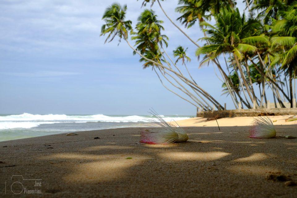 Flowers-wijaya-beach-Sri-Lanka