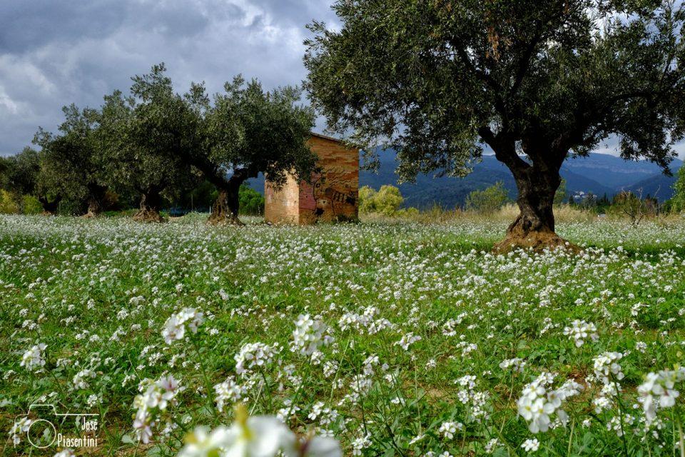 paisajes-ruta-4x4-montseny-con-aventurame-0042