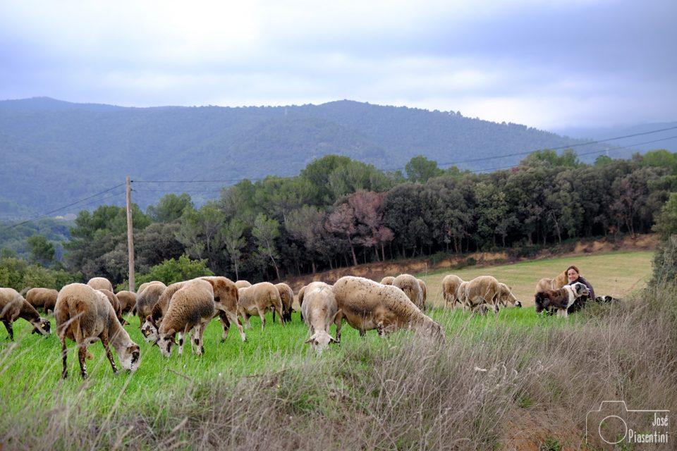 Pastora-ovejas