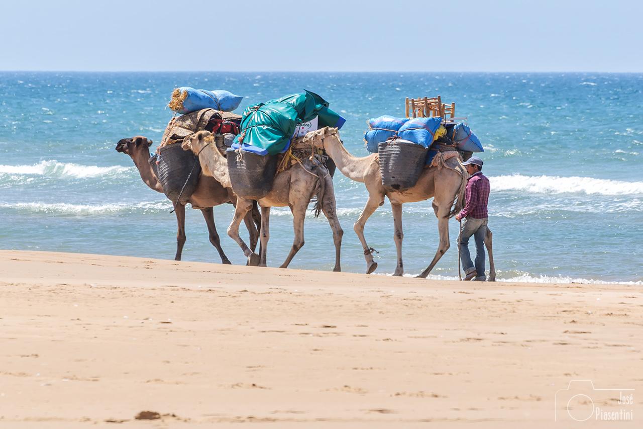 camel-marruecos-essaouira-sidi-kaoki