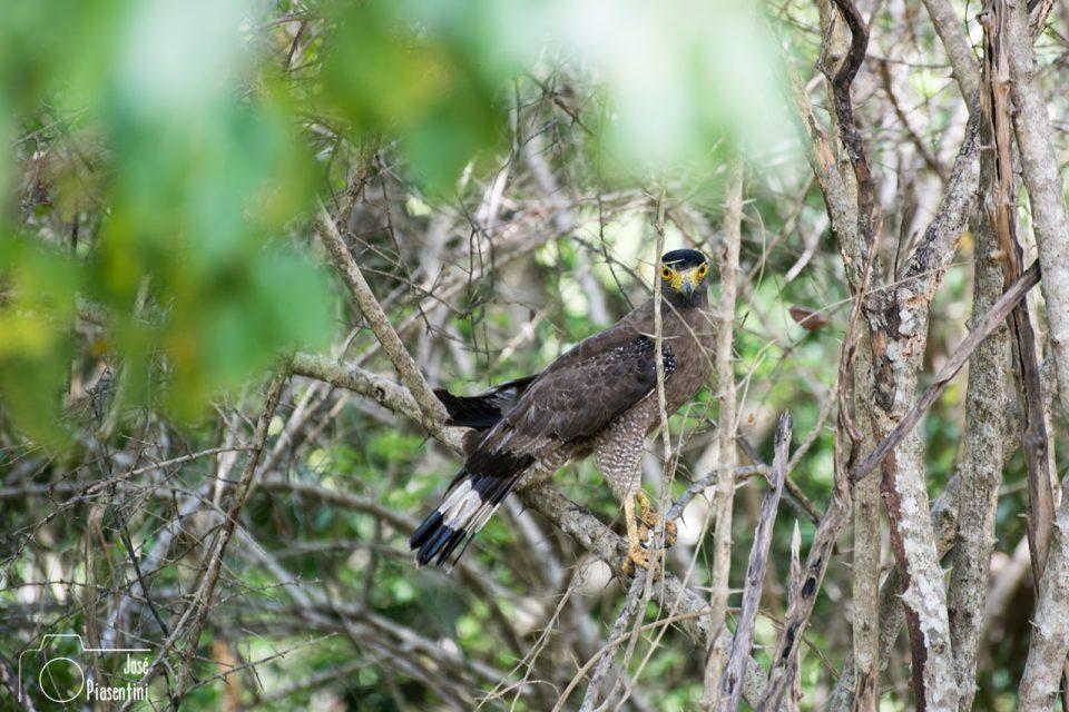 Agle-Kumana-Park-Sri-Lanka