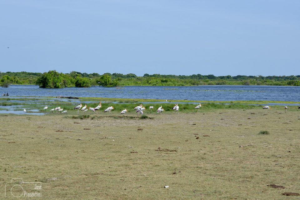 kumana-national-park-Yala-Neigboard