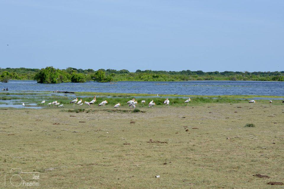 kumana-national-park-Yala-Neigboard