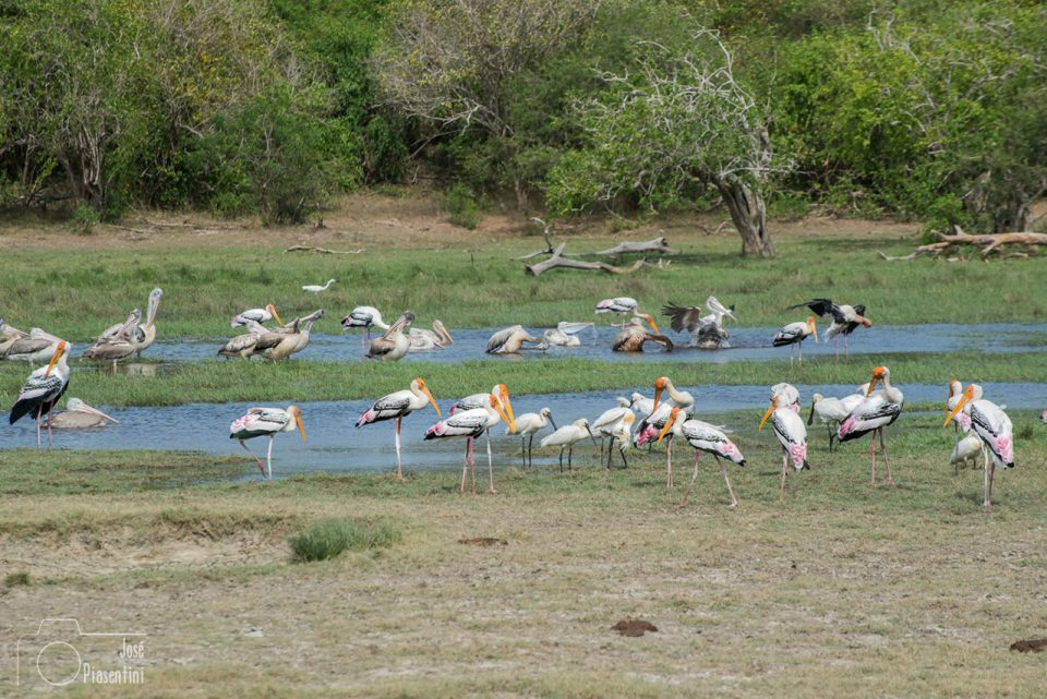 Birds-kumana-national-park-arugam-bay