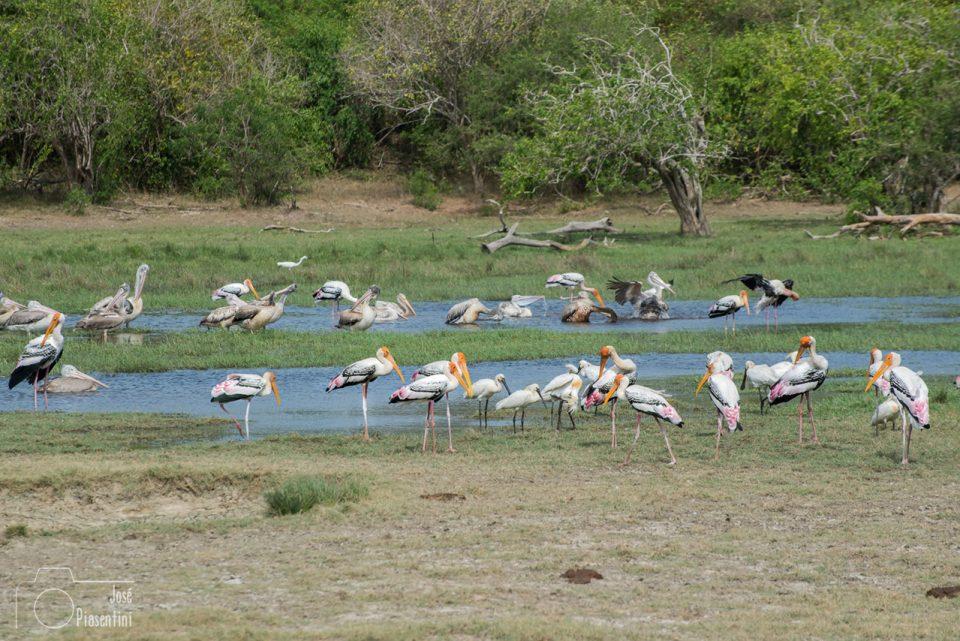 Birds-kumana-national-park-arugam-bay