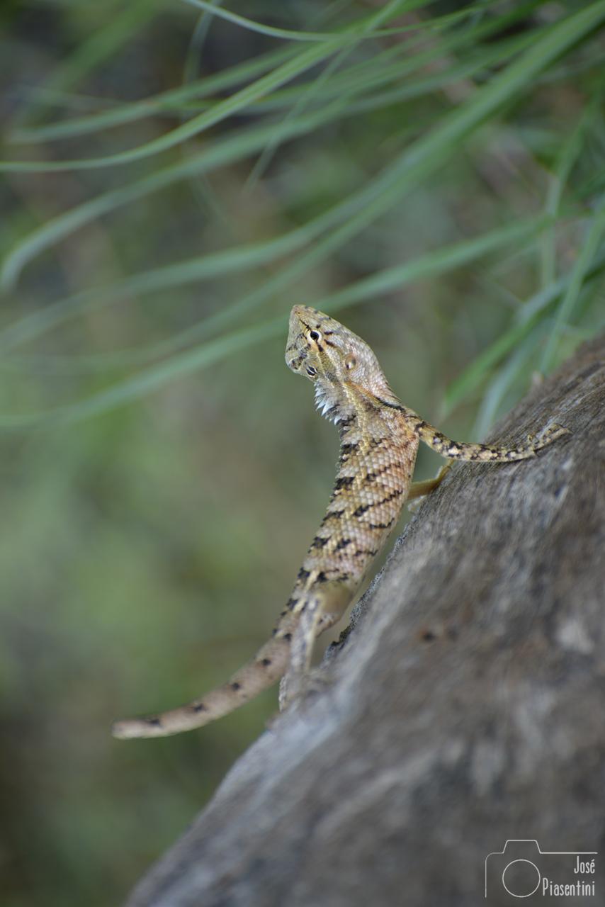 Iguana-kumana-Sri-Lanka