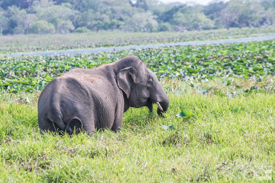 kumana-national-park-elephant