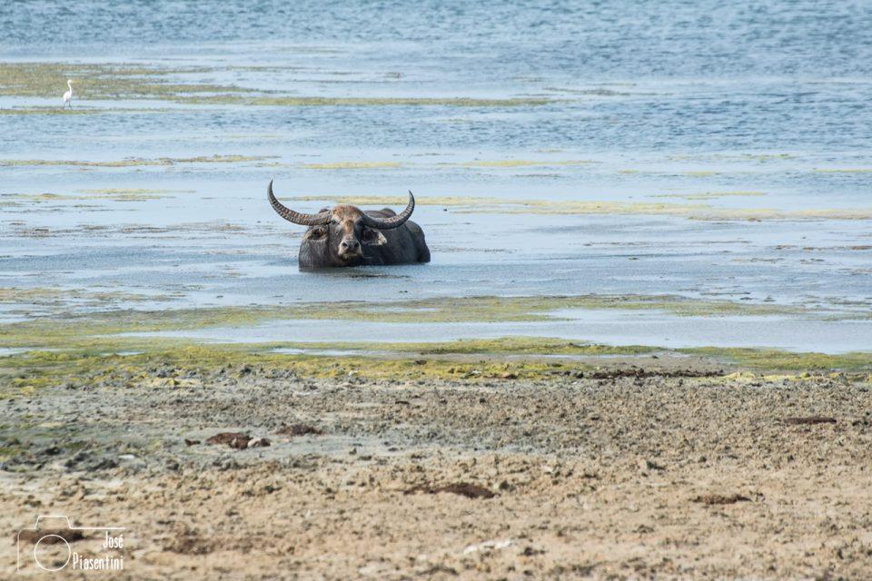 Kumana National Park - Que hacer en Sri Lanka con niños