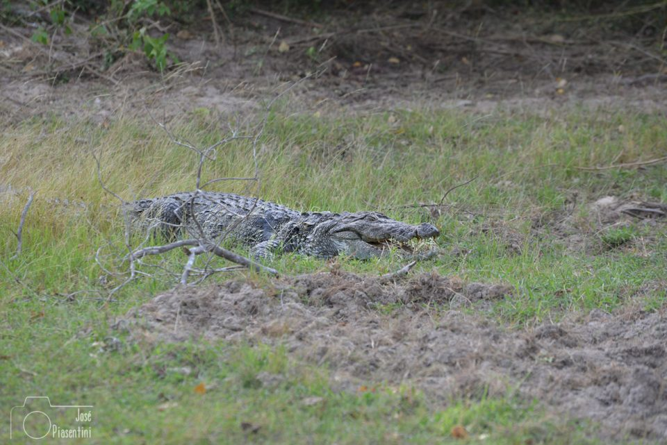 Cocodrile-kumana-national-park
