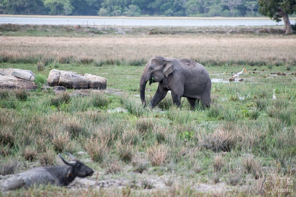 Things to do in Sri Lanka with children - Kumana National Park