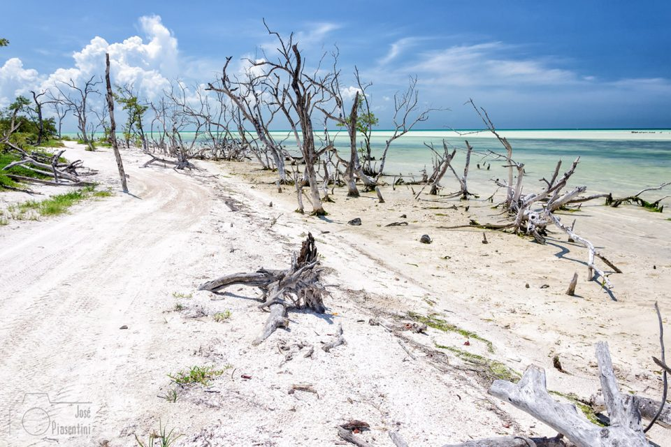 Dead-trees-Holbox-beach