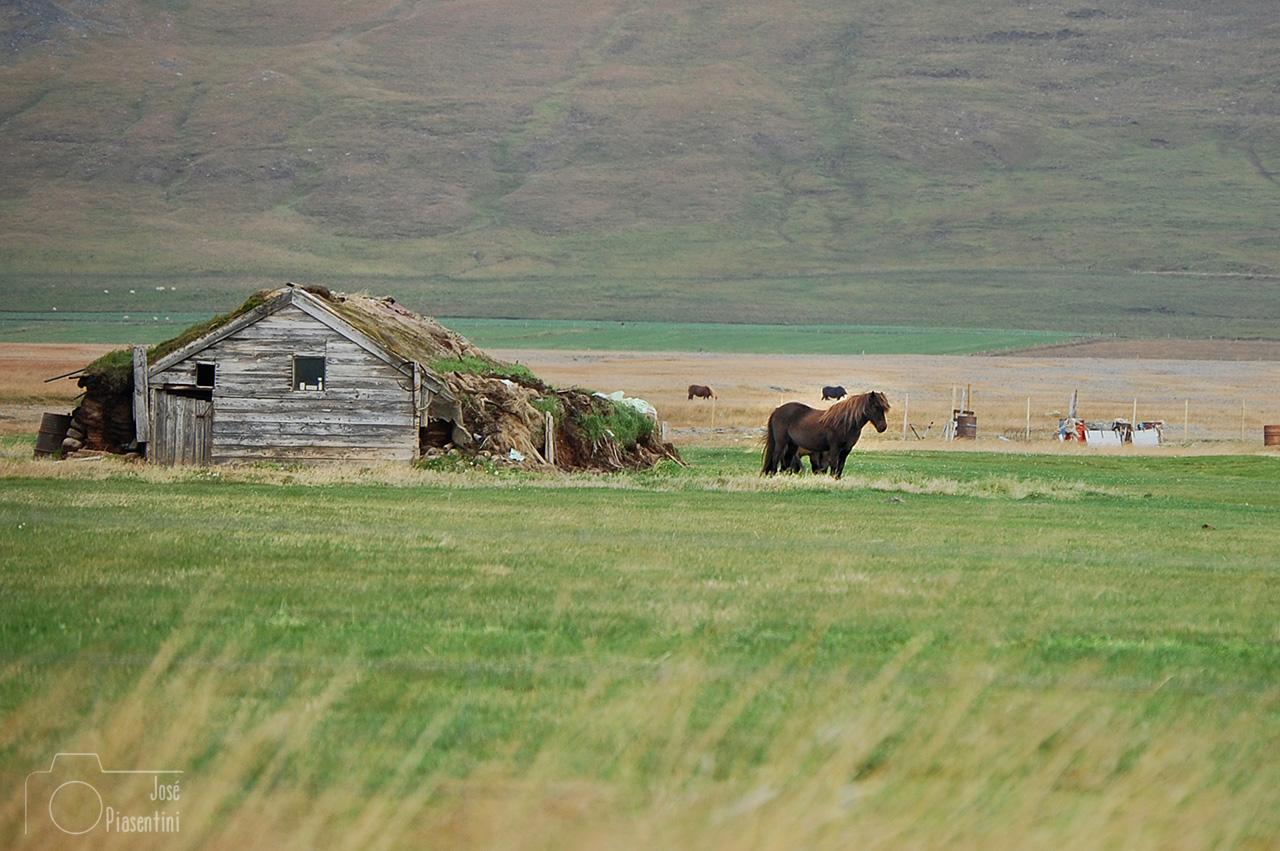 Dia-5-Islandia-camino-a-Varmahlio-(13)