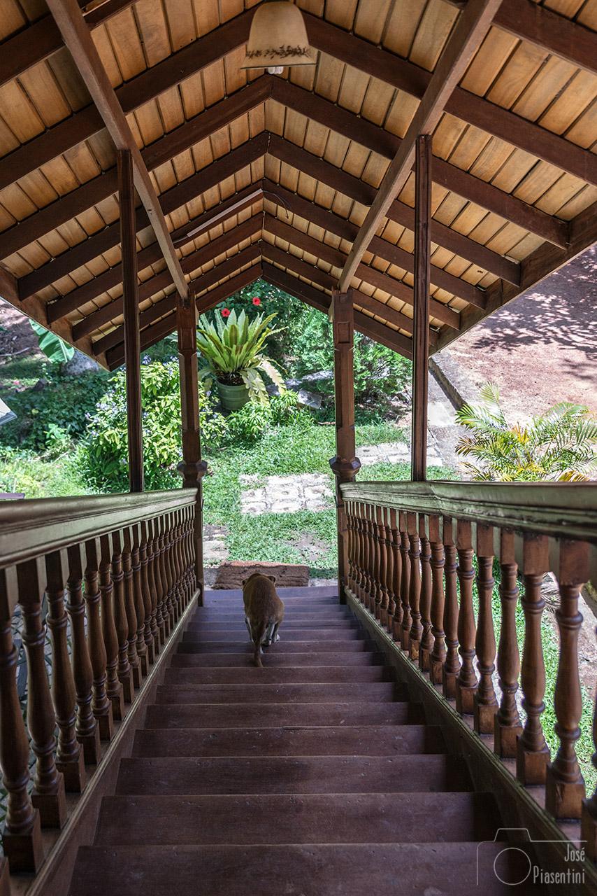 Stairs-Handunugoda-Tea-Factory