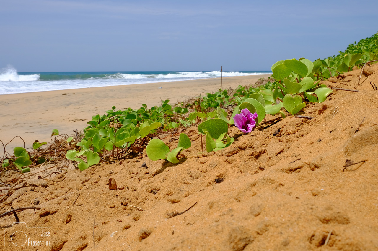 Indic beach