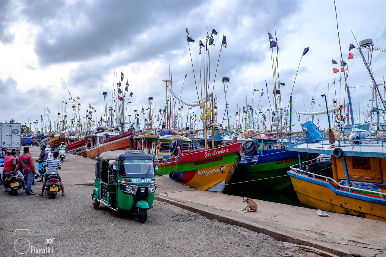 The Mirissa harbor
