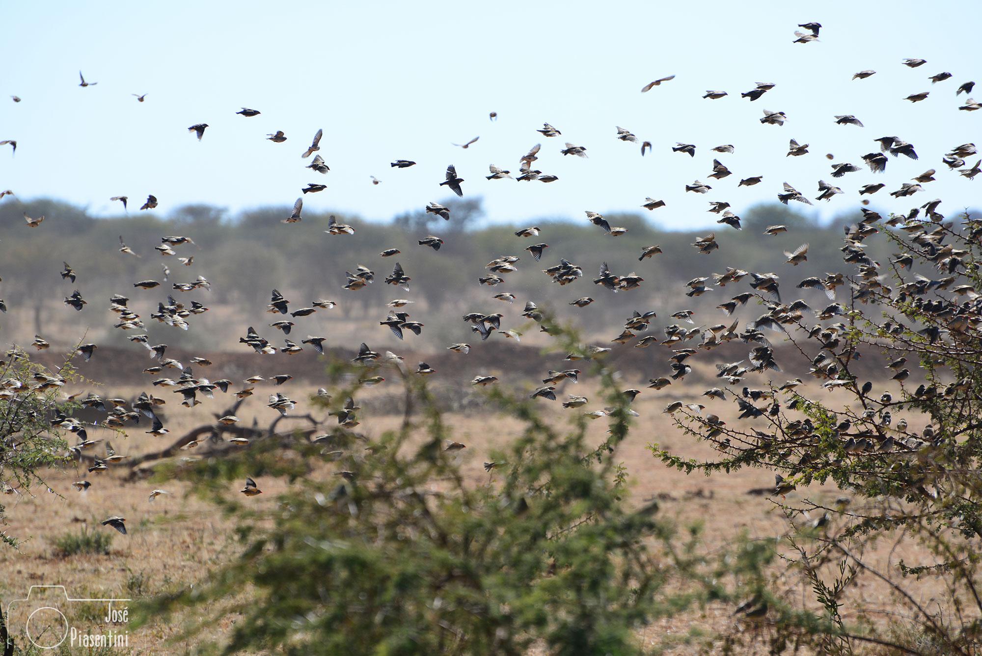 Birds-Erindi-Private-Game-Reserve