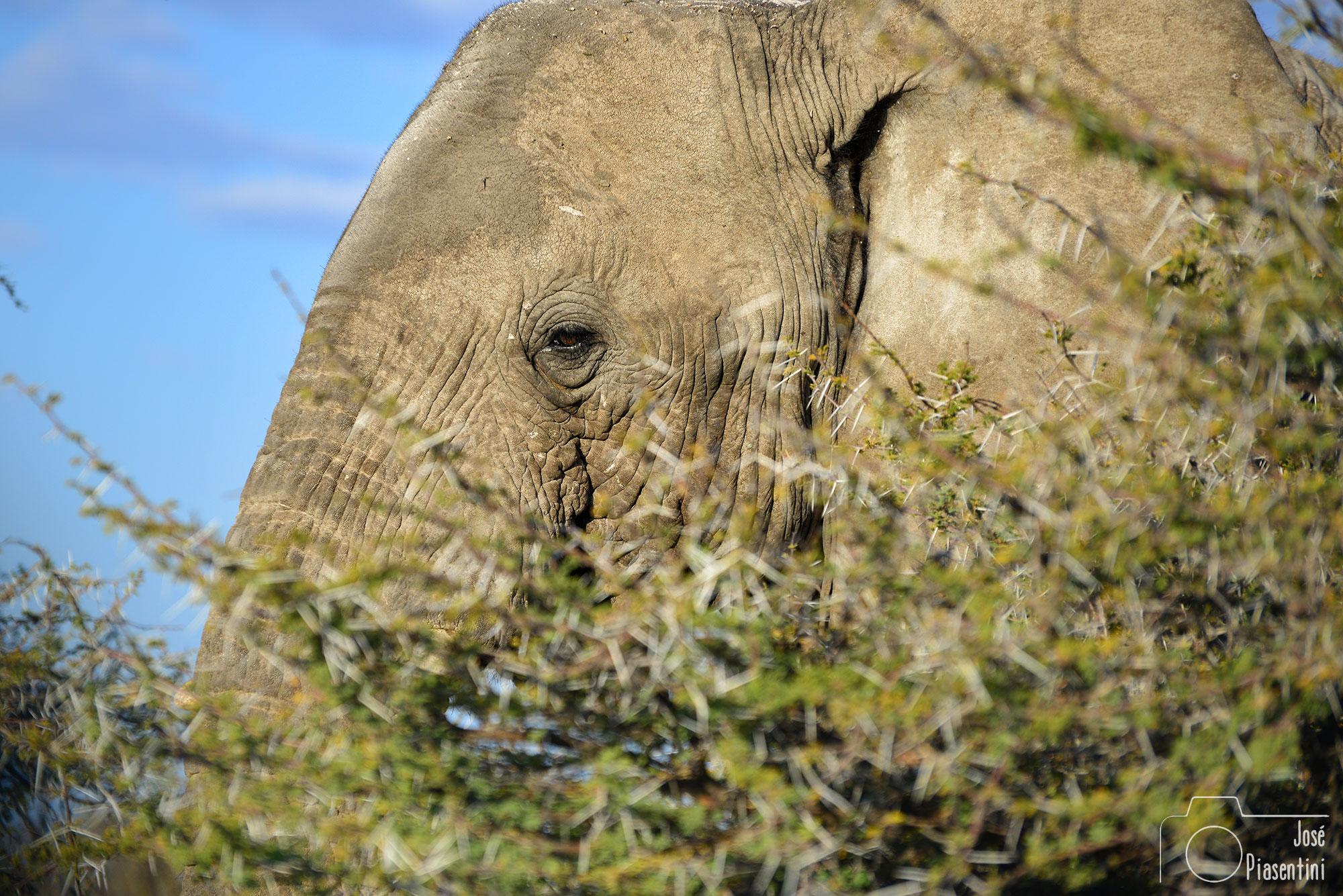 Elephant-Namibia-Etosha