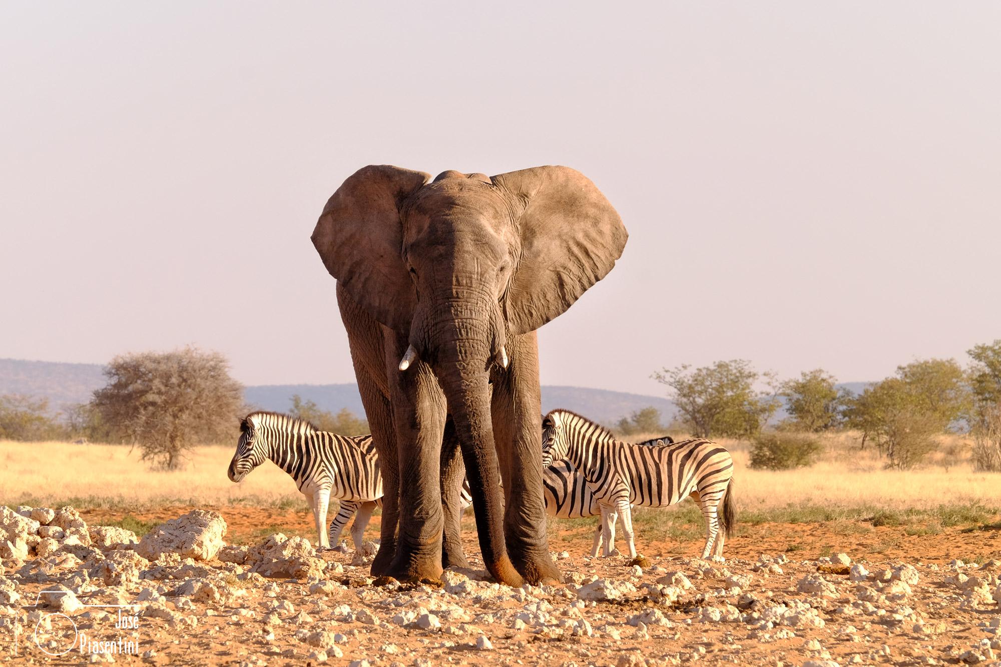 Etosha-National-Park-Elephants