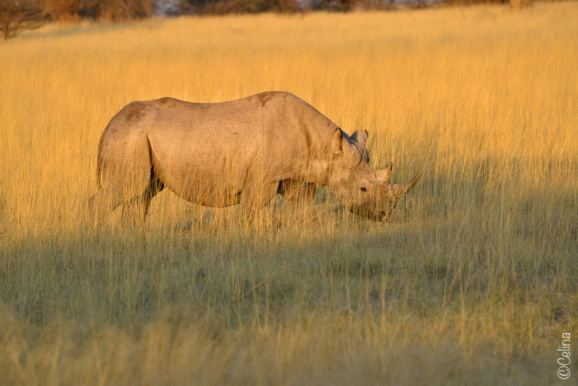 Rhino-Etosha-National-Park