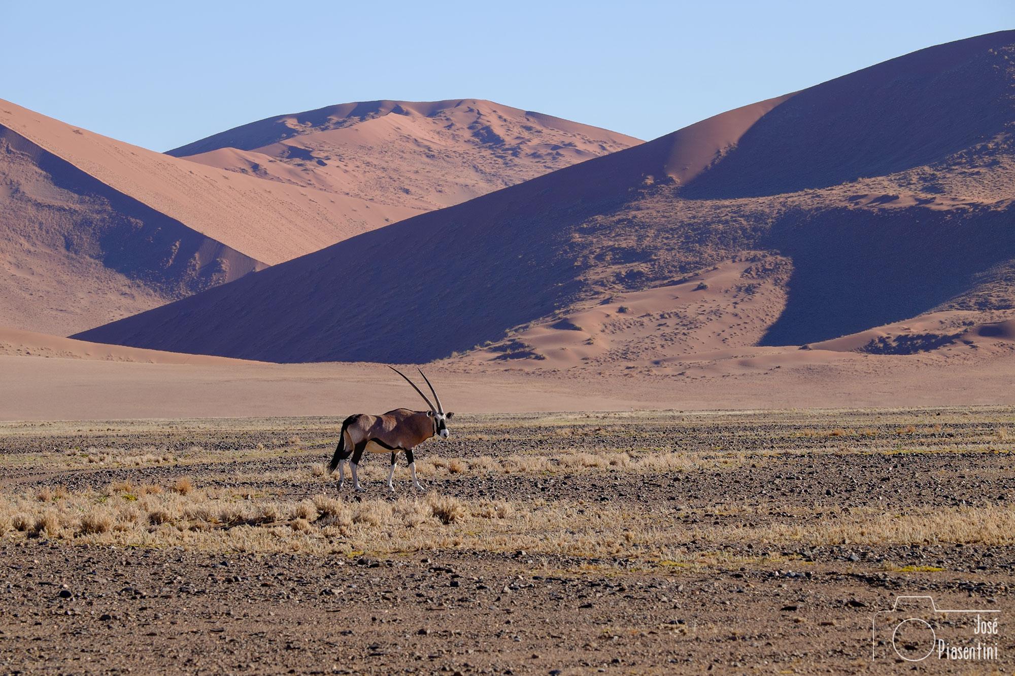 Orix-Namibia-Sossusvlei
