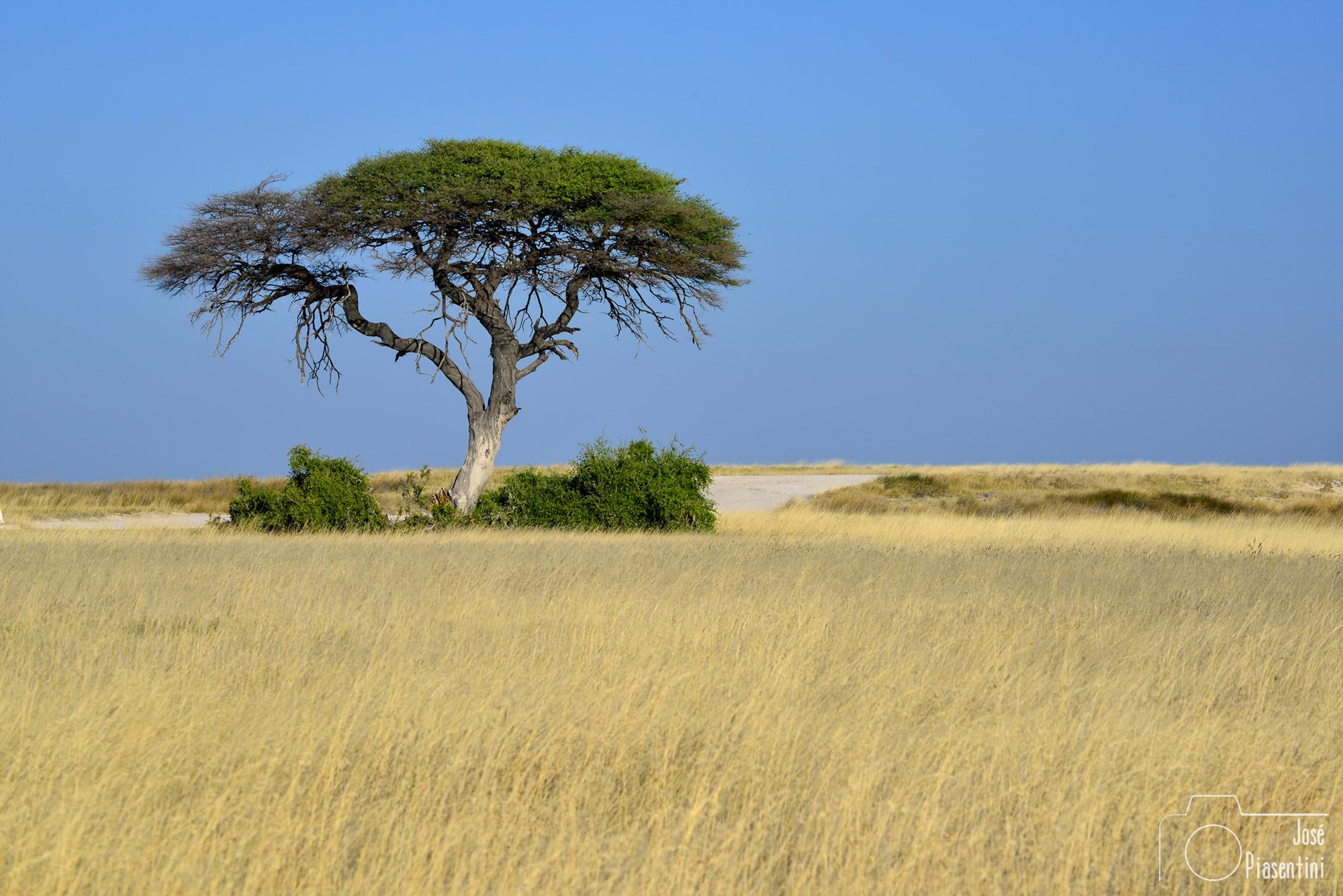 landscape Etosha National Park Namibia