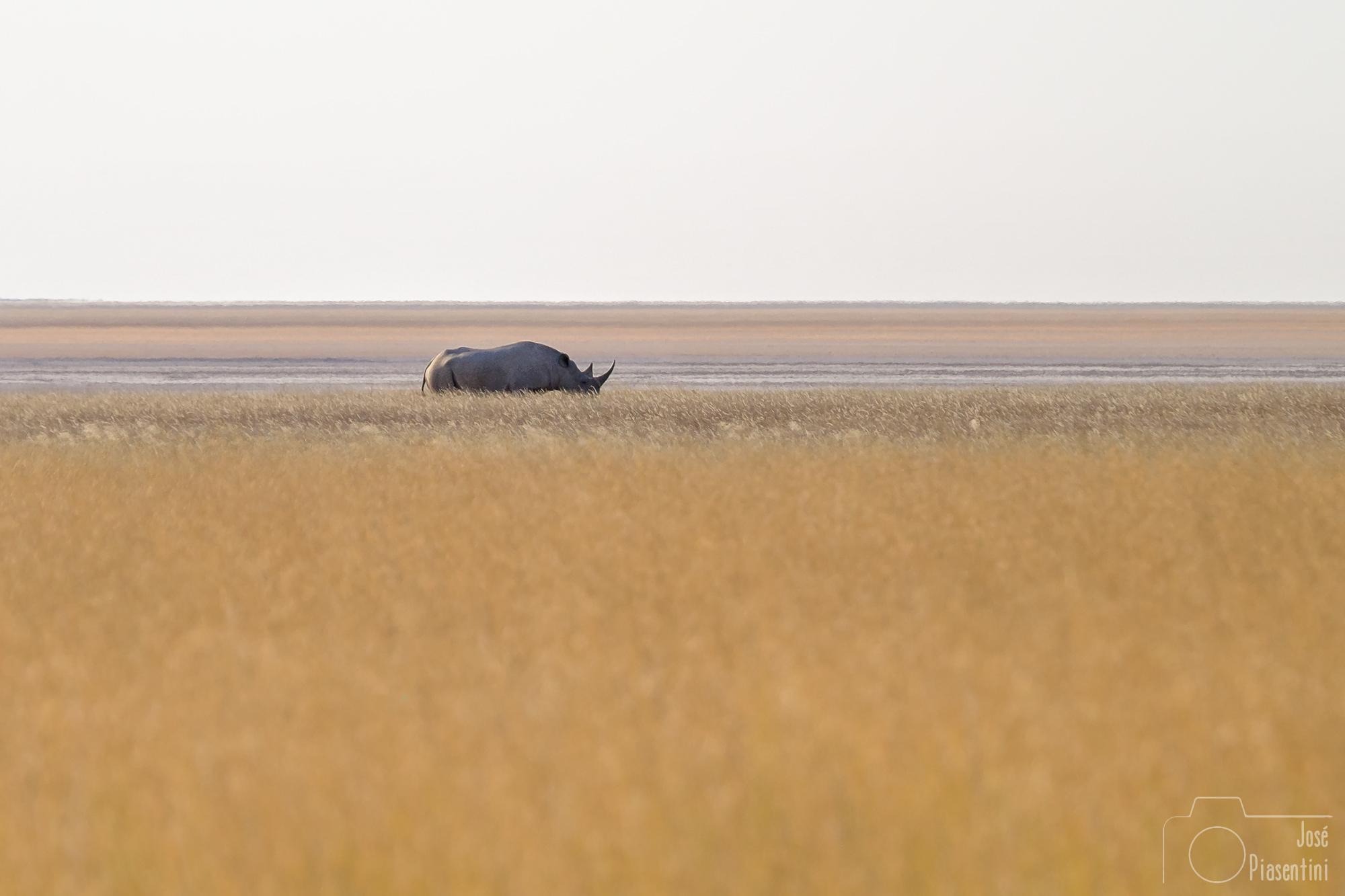 Etosha landscape and rhino