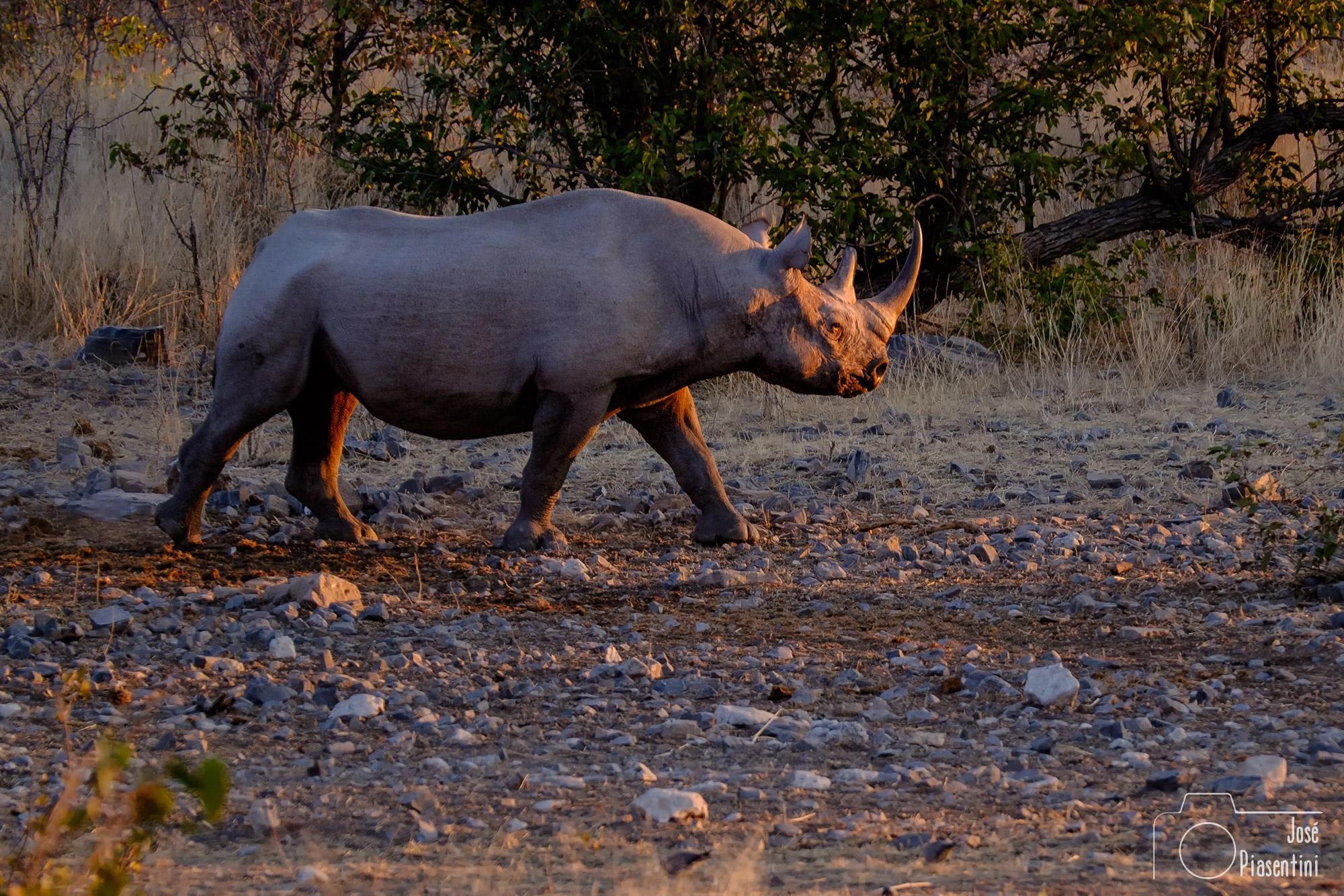 Namutoni water hole rhinos