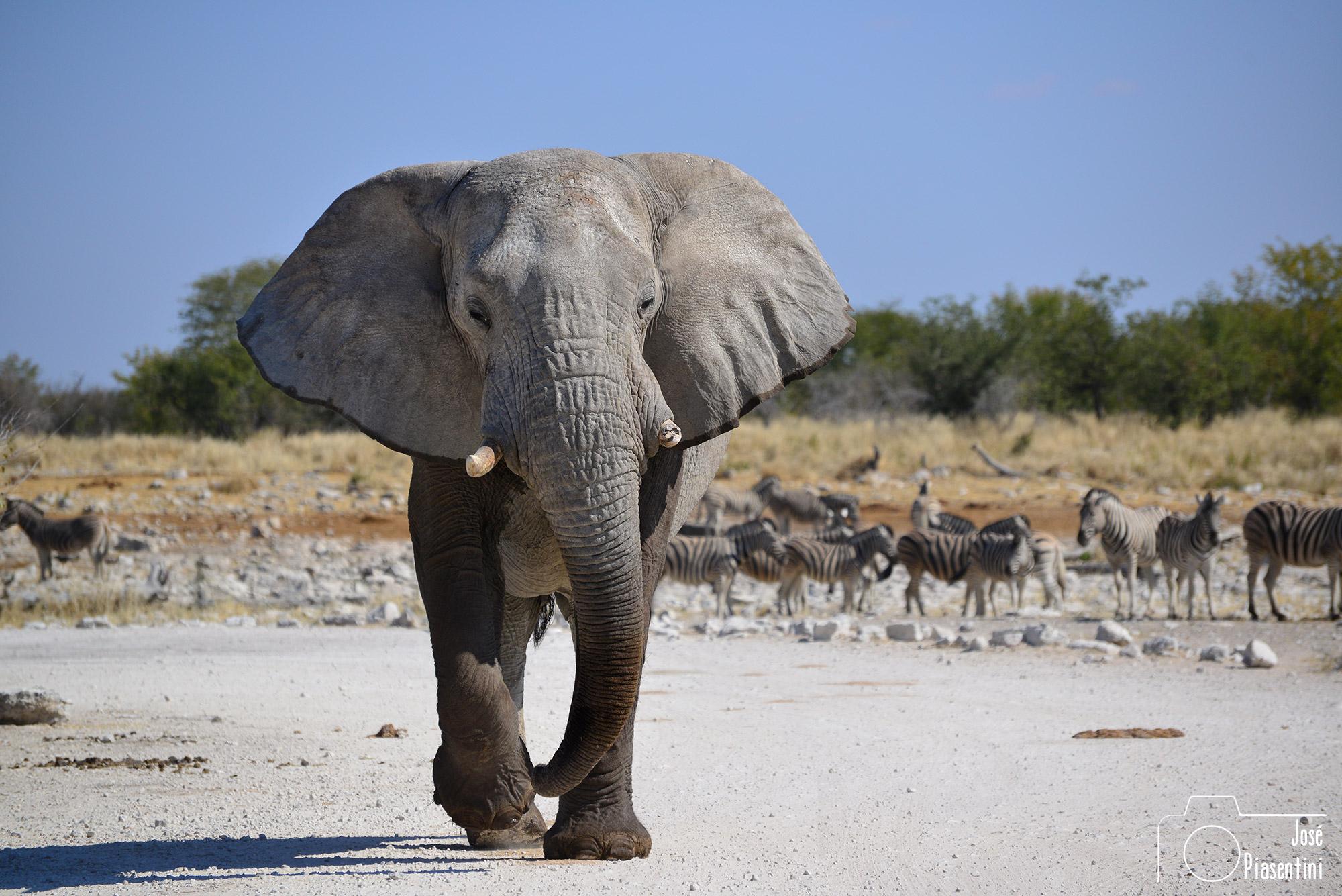 Namibia Etosha National Park