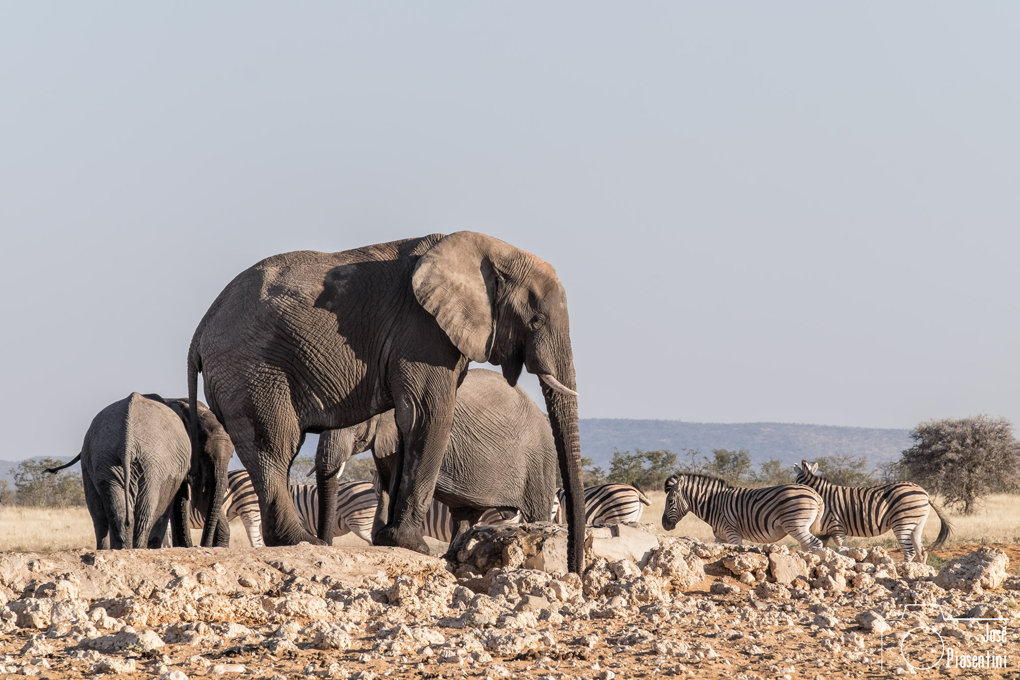 Etosha big five elephant