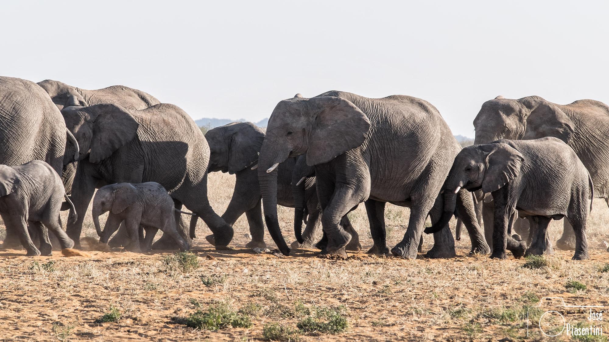 Elefantes en parque Nacional Etosha