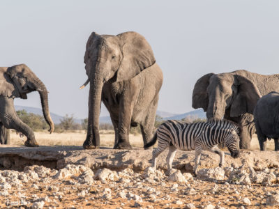 Safari en Etosha National Park