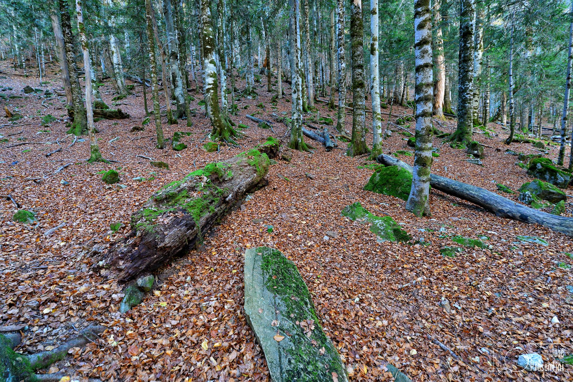 Bosques del Pireneo