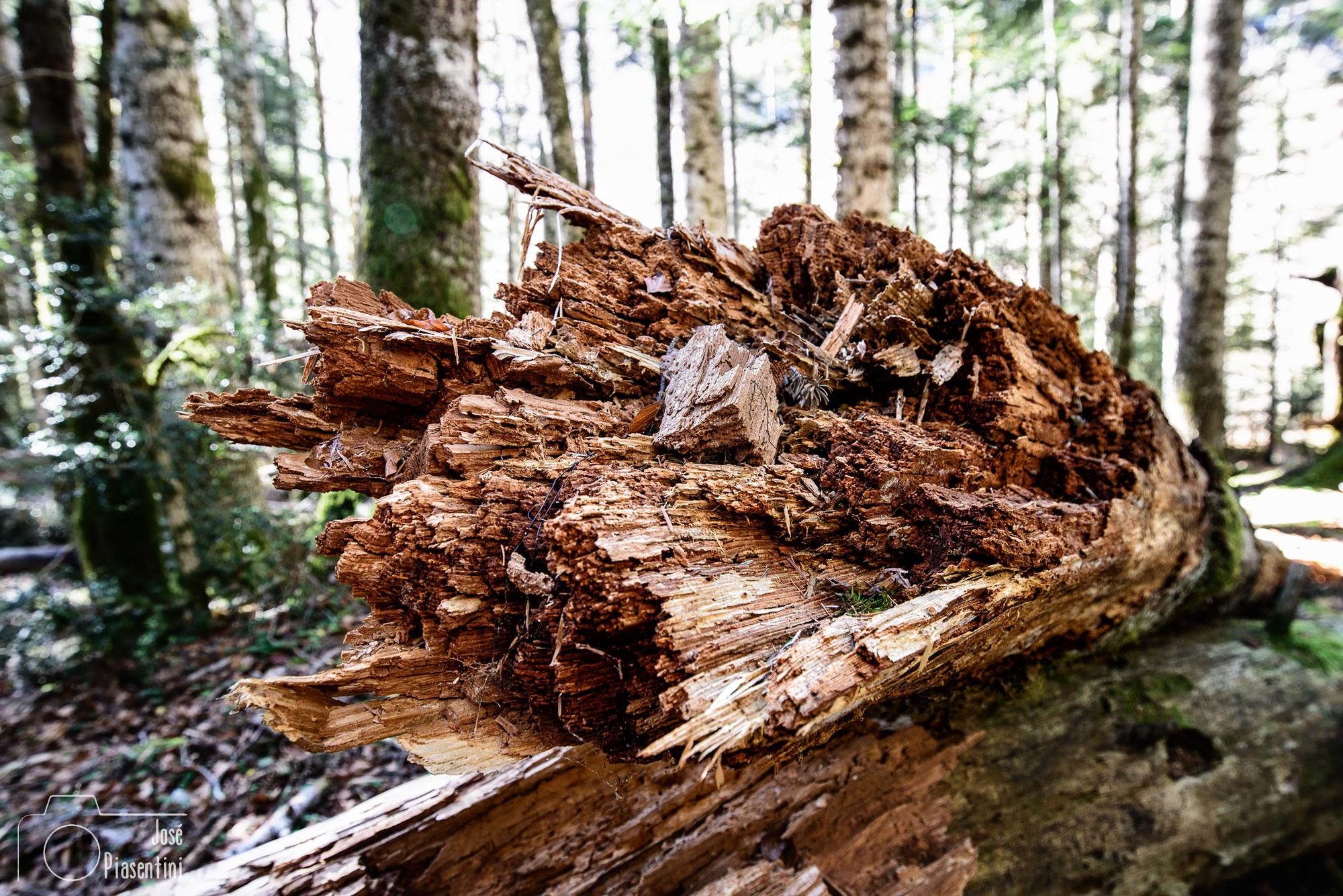 Bosque de Ordesa y Monte Perdido