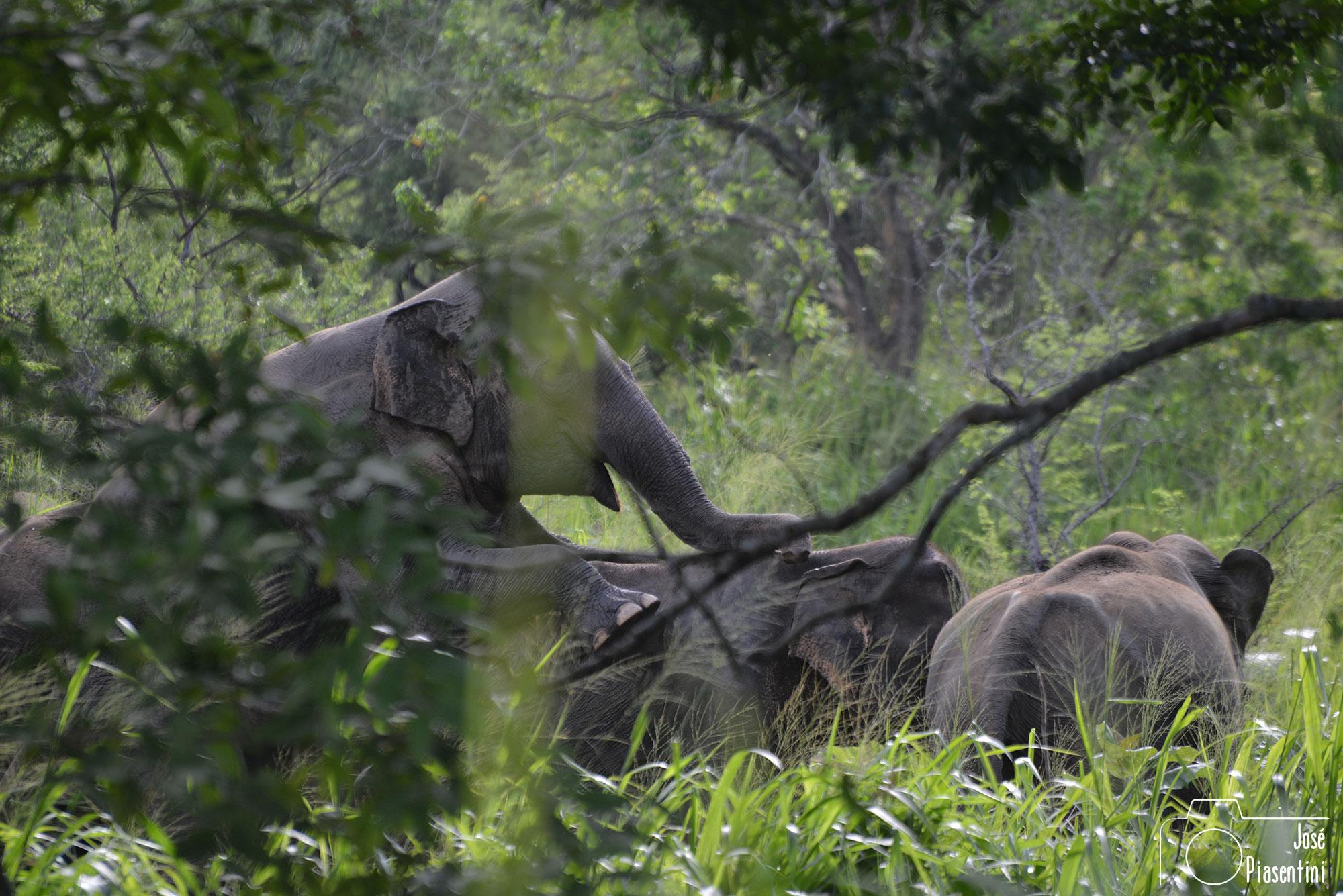 Eco Park Polonnaruwa