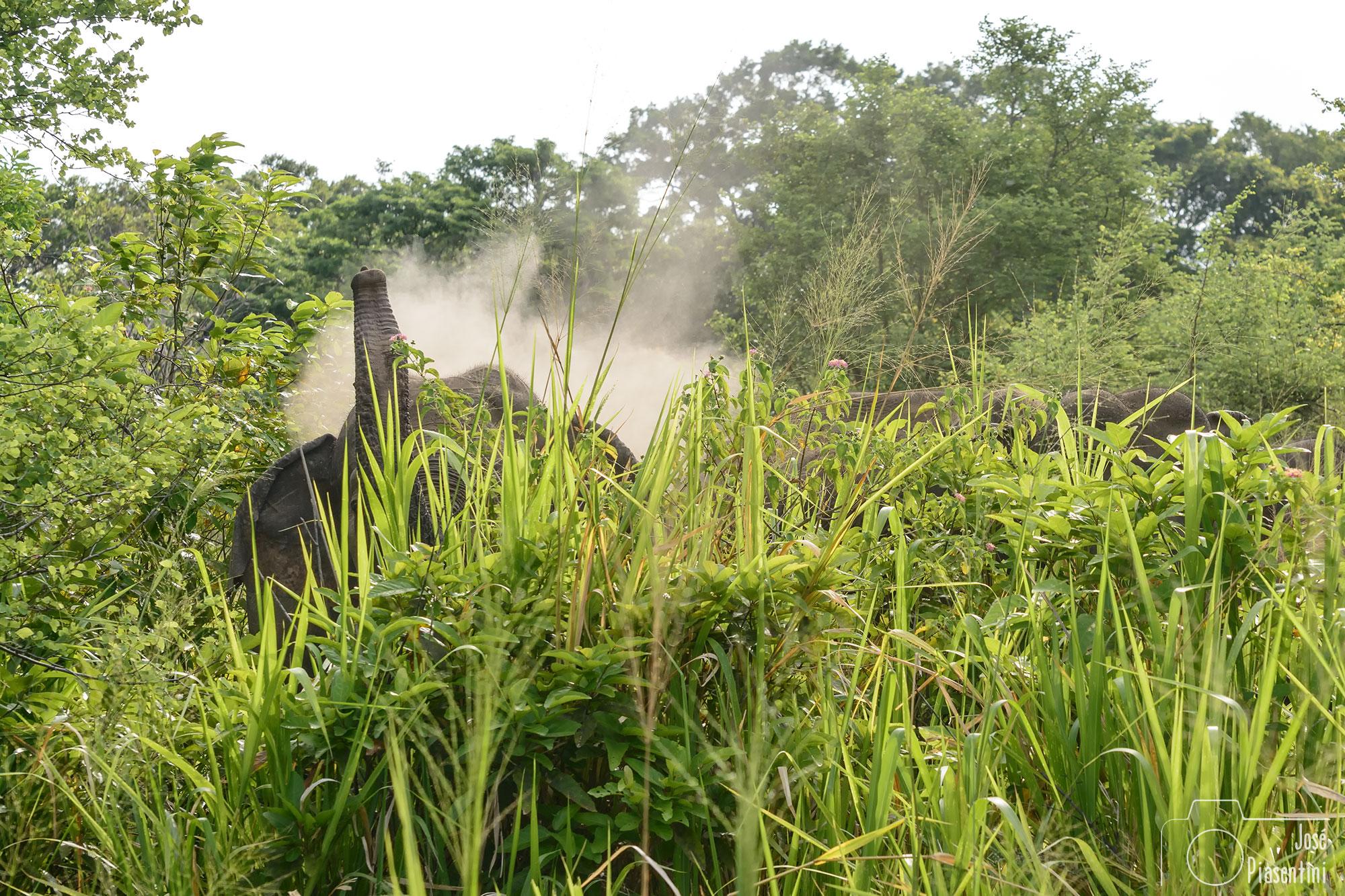 Elefantes en la maleza