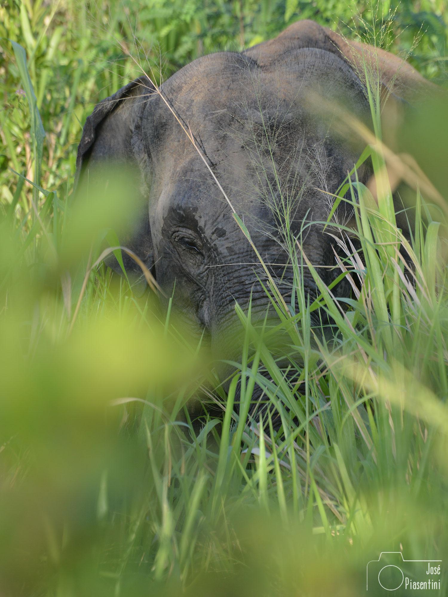 Eco Park Polonnaruwa, en busca de los elefantes