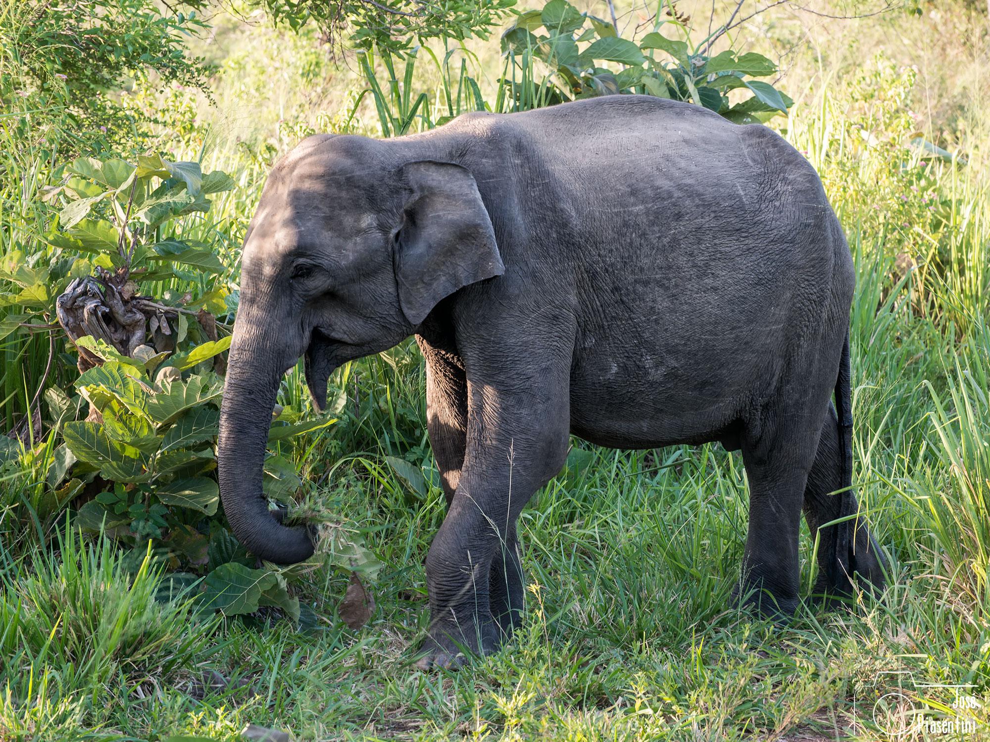 PN Eco Park Sri Lanka