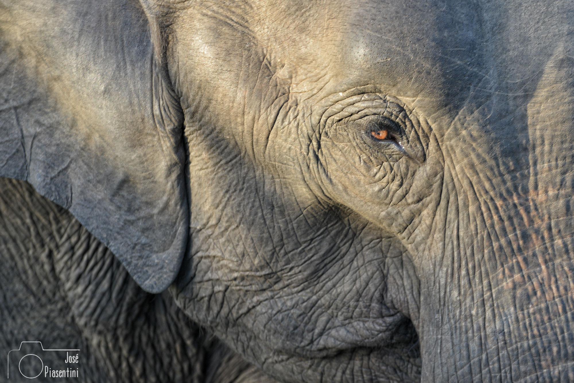 Detalles y texturas elefantes