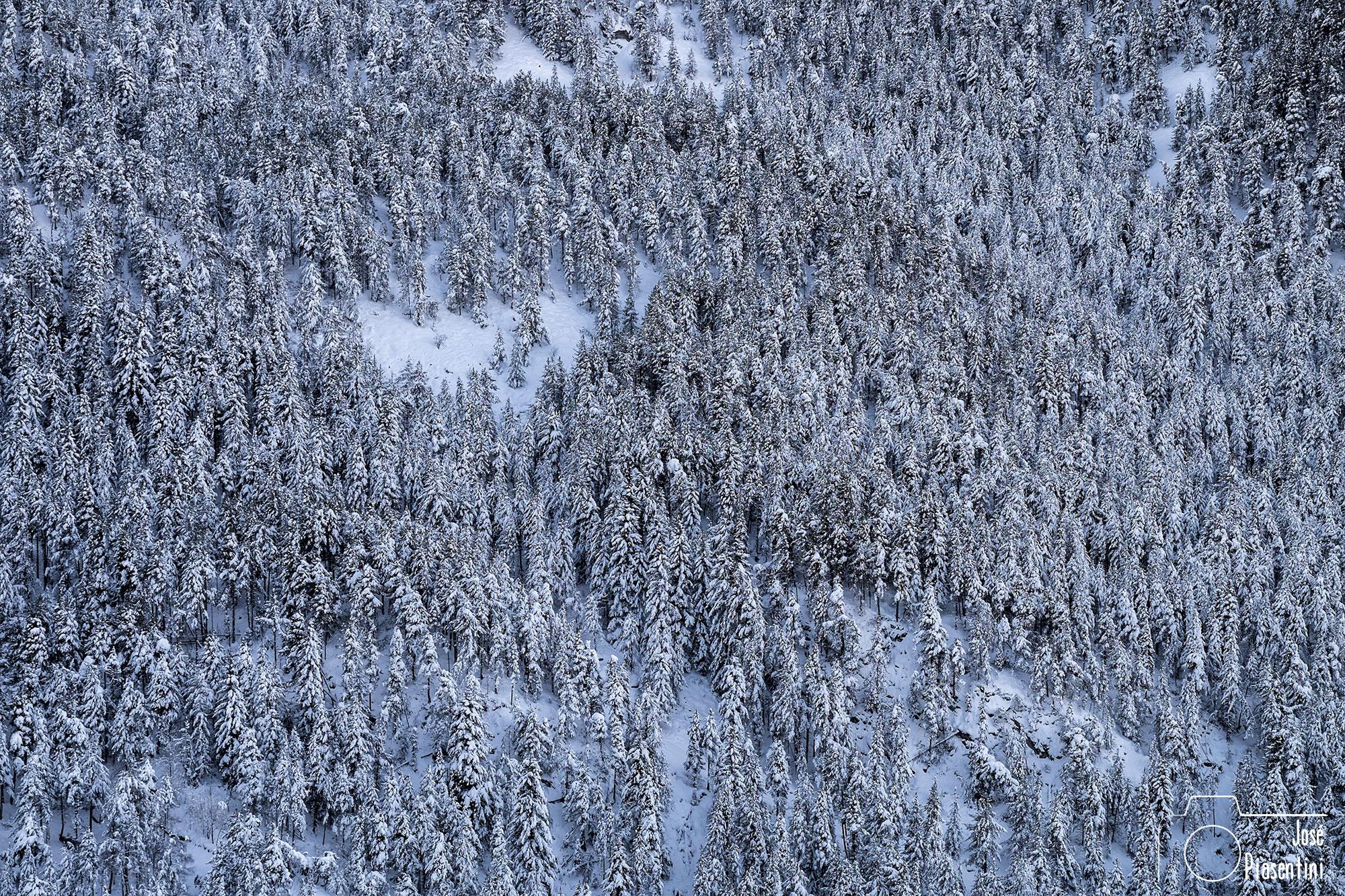 Bosques-de-Andorra