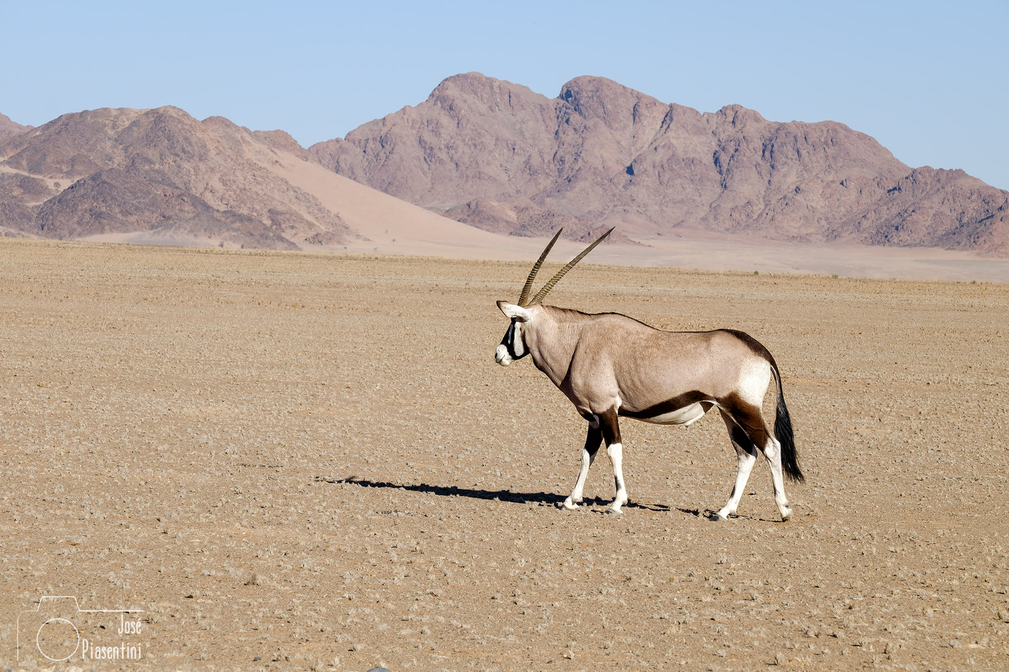 Oryx-Namibia-way-to-Solitaire