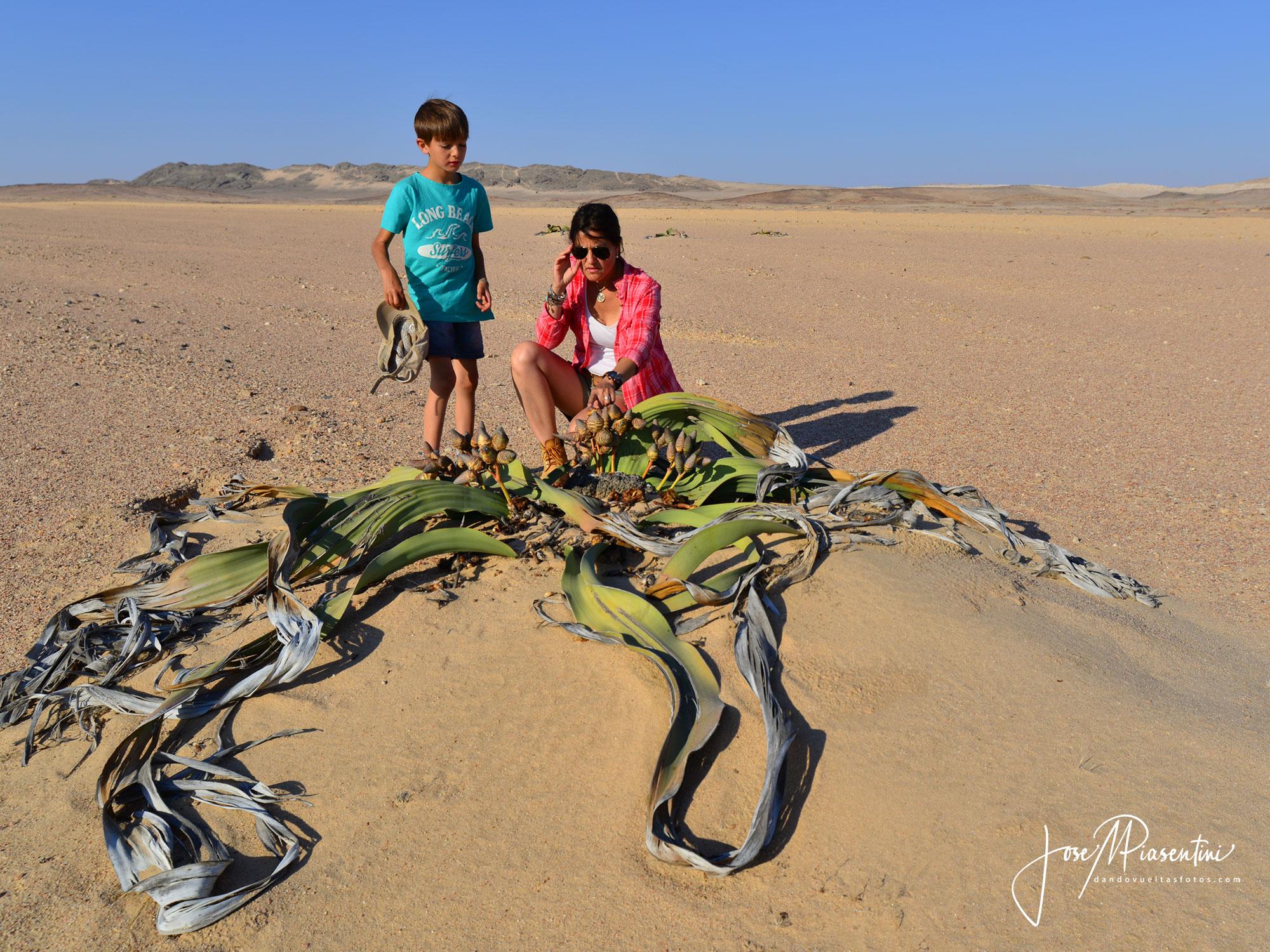 Paseo por Moonscape y Welwitschia drive