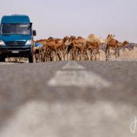 Marruecos en Sprinter 4×4