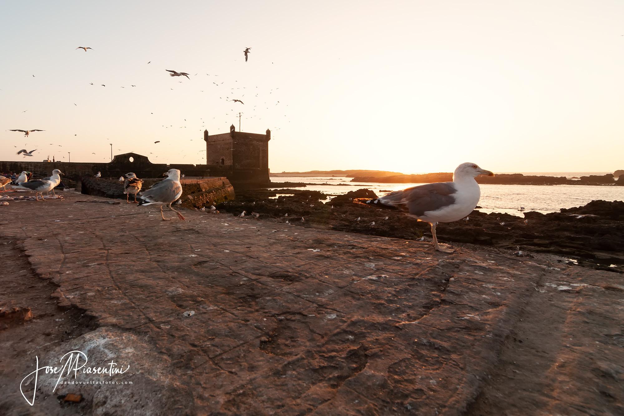 Essaouira con niños