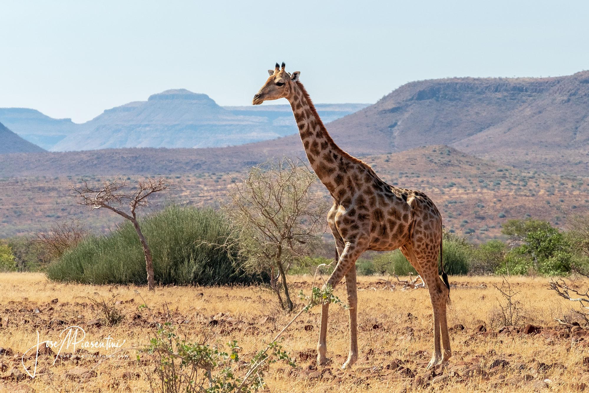 damaraland-Camino-Twyfelfontein wildlife
