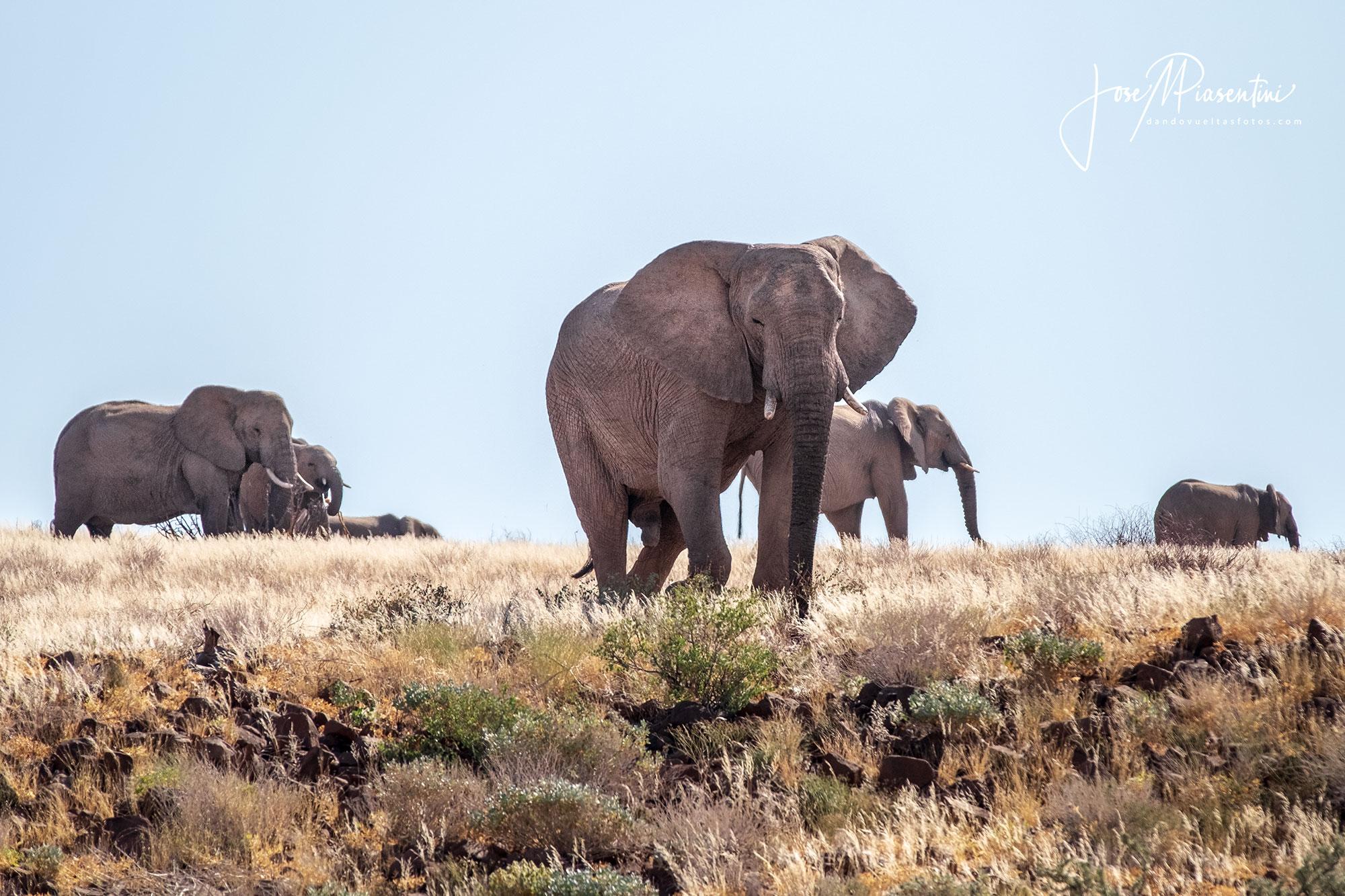 Twyfelfontein-desert-elephants